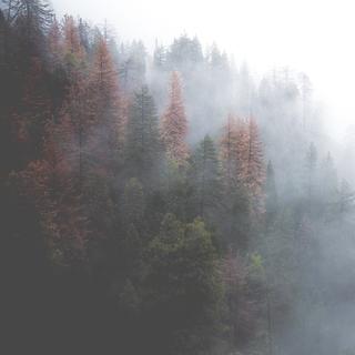 Meditation name: Desarrollando la bondad amorosa