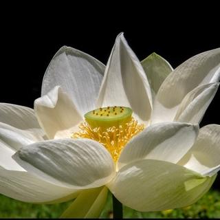 Meditation name: Om Ah Hung - A Sound Meditation