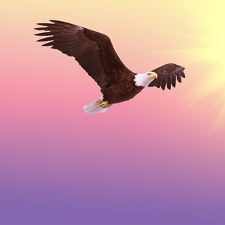 Meditation name: Embrace the Energy of the Eagle