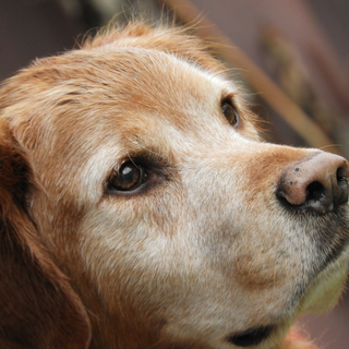Meditation name: Peaceful Dog Walk: Trail Hike With Charlie
