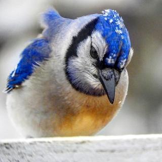 Meditation name: Spring Birds