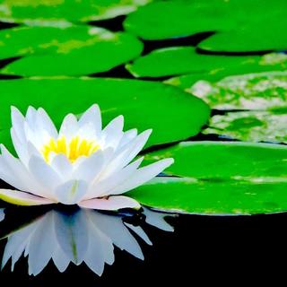 Meditation name: Powerful Zen Awakening & Intuition