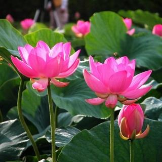Meditation name: Intro to Mindfulness Meditation
