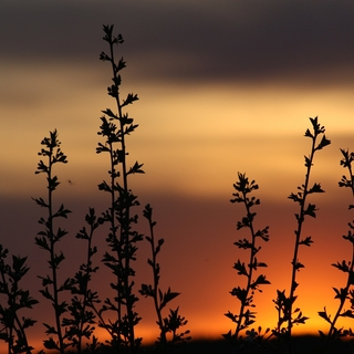 Meditation name: April Masterclass Day 2: Science of Stillness
