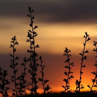Meditation name: April Masterclass Day 3: Science of Stillness