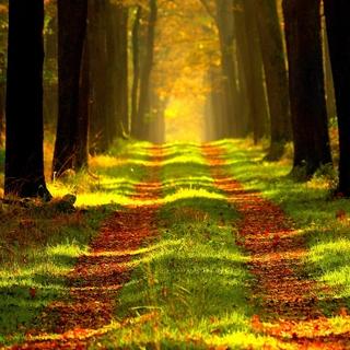 Meditation name: Meditazione dei Tre Respiri