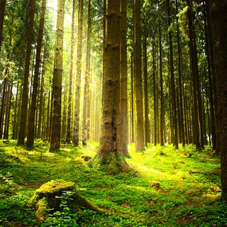 Meditation name: Soothing Mindfulness Of Breathing Meditation