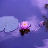 Meditation teacher: LotusOpus